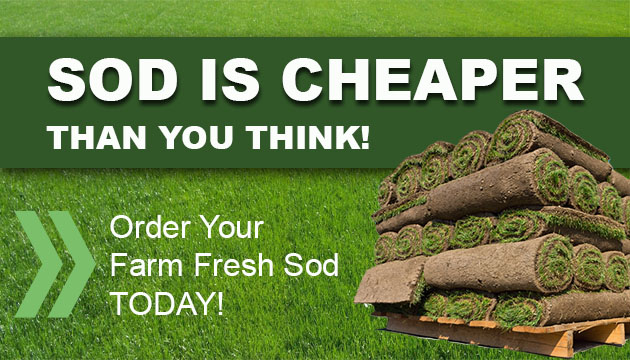 sod-is-cheaper